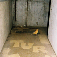 Canary in the NMC tunnel